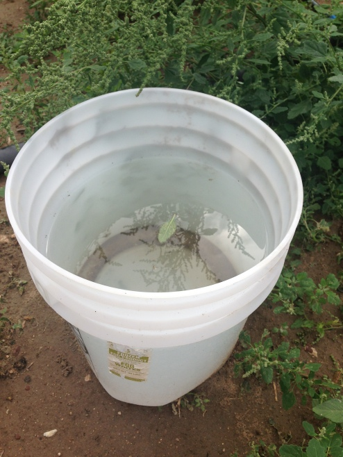 Bucket with 9 inches of rain water