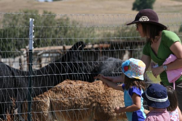 Kids and Alpacas