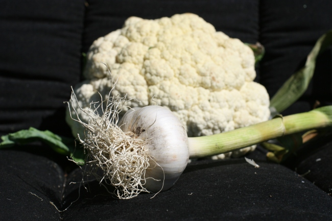 Cauliflower and garlic
