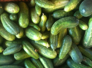 Pickling Cucumbers