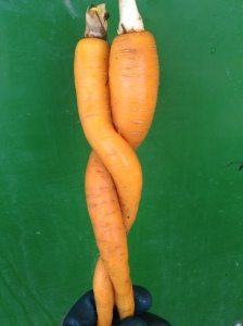 Carrot Couple