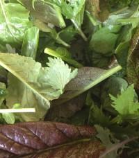 Braising Mix AKA Spicy Salad Mix