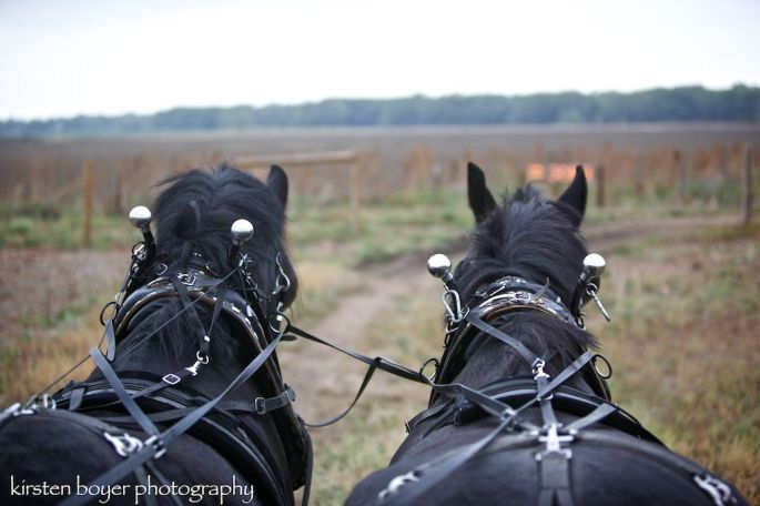 Horses from behind