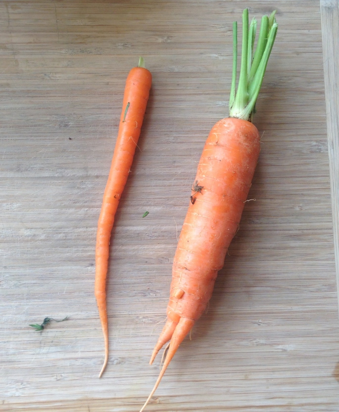 Small and Large Carrot