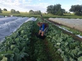 Teller Harvest