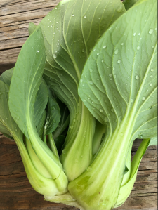large Bok Choi on a wooden table