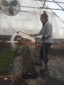 Katie watering
